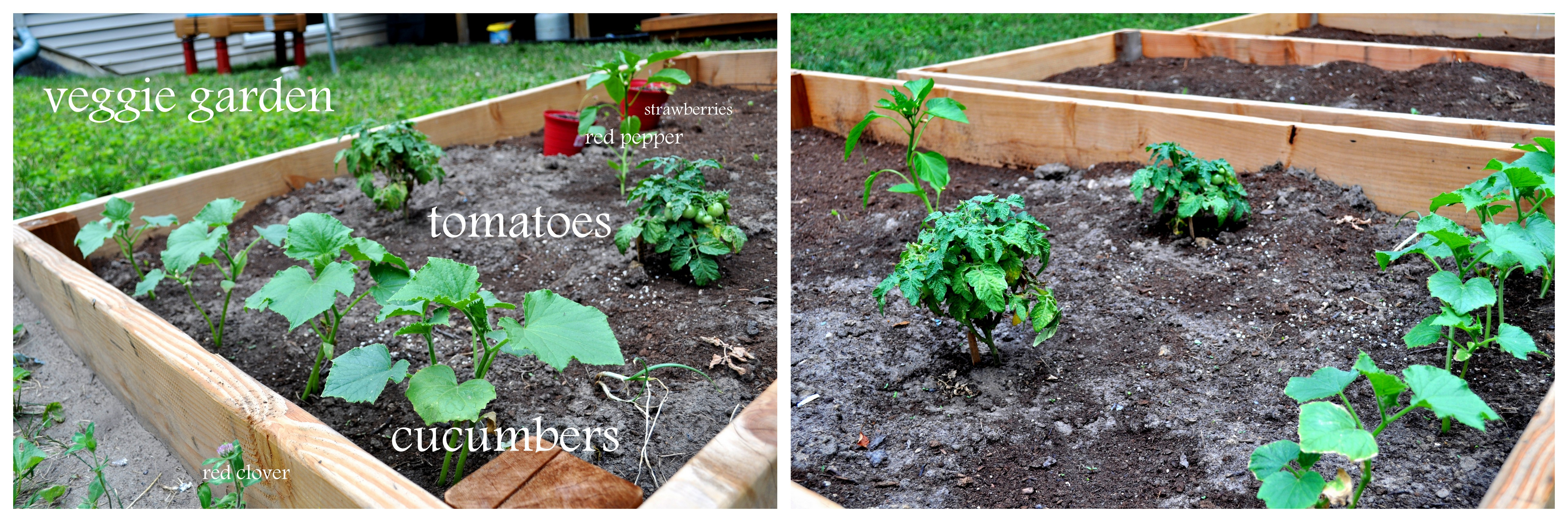 something allergies and counting…down  vegetable garden update, Natural flower